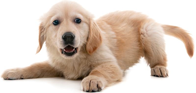 Perro agachado: Cuidado de bienestar en Austin