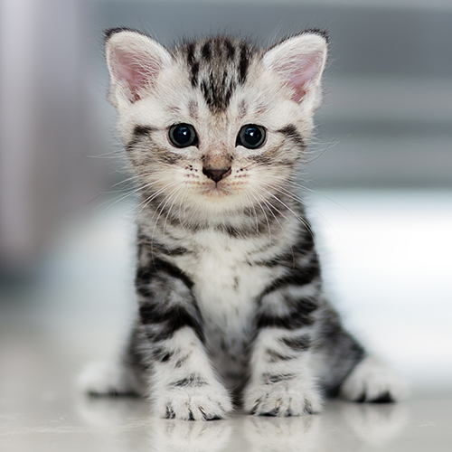 Black and white tabby on floor 1x1