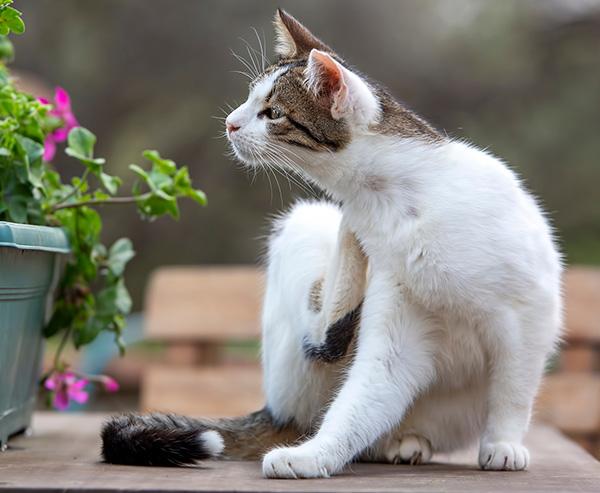cat scratching next to a flower planter