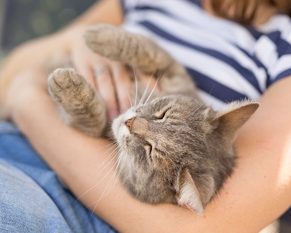 sleepy cat on womans lap